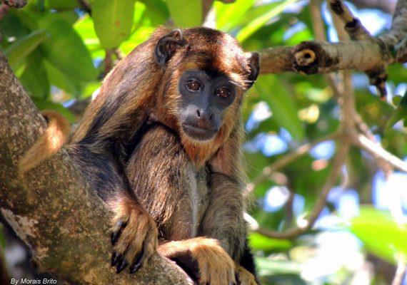 Delta Safári: uma experiência inesquecível em meio aos animais