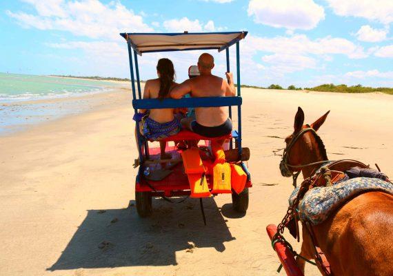 O que você precisa saber sobre a Rota do Cavalo Marinho em Barra Grande?