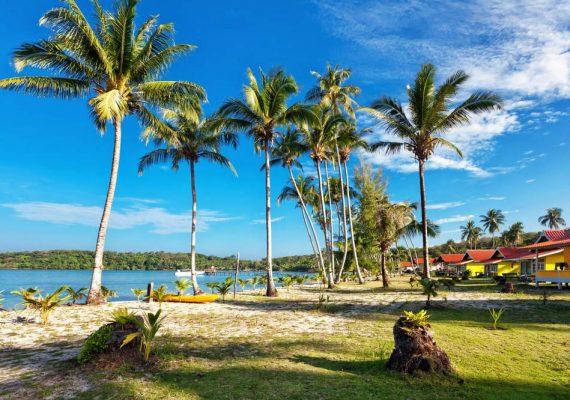 Cajueiro da Praia no Piauí: o lar do maior cajueiro do mundo!